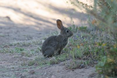 Зайцев очень много и почти не боятся людей.