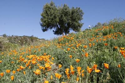 Территория университета обильно украшена цветами.